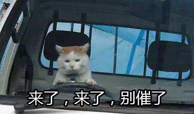 来了来了,别催了。猫咪开车