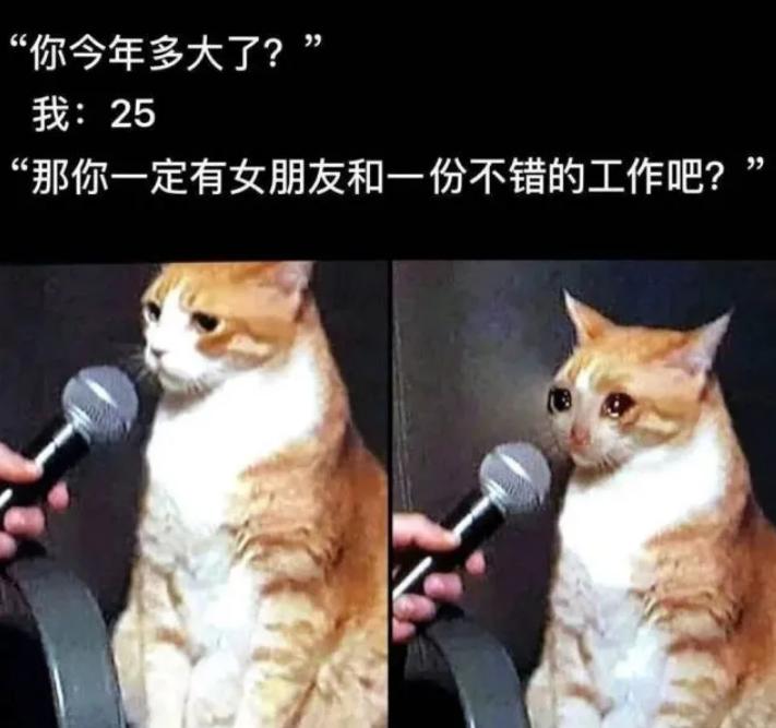 猫咪采访中哭泣