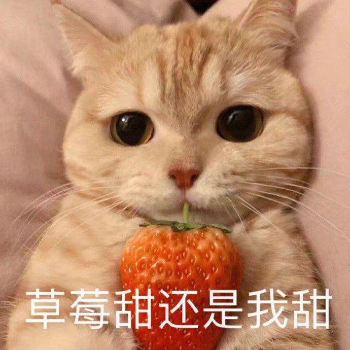 草莓甜还是我甜_卖萌_猫咪吃草莓