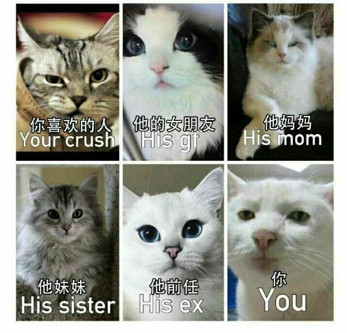 你喜欢的人(猫咪版),他的女朋友,他妈妈,他妹妹,他前任VS你